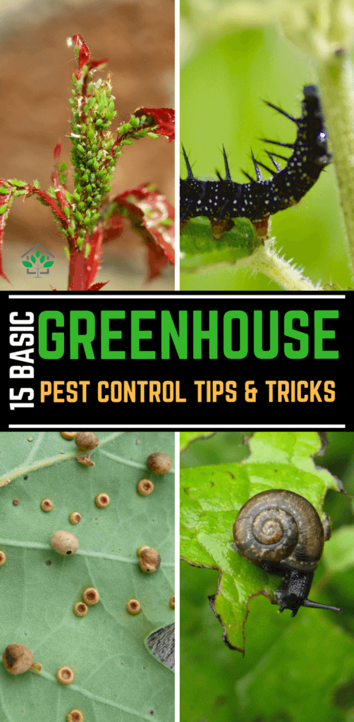 15 Basic Greenhouse Pest Control Tips and Tricks