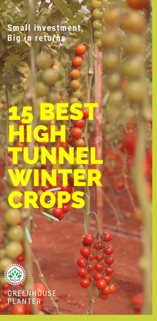 15 best high tunnel (green house ) winter crops: In order to increase their returns, Greenhouse farmer plants the crops during the winter in high tunnels with appropriate heating systems. The profit on the crops is increase and the farmer get the most return of the greenhouse. The greenhouse winter crops include tomatoes, lettuce, onions. strawberries, reddish turnips etc