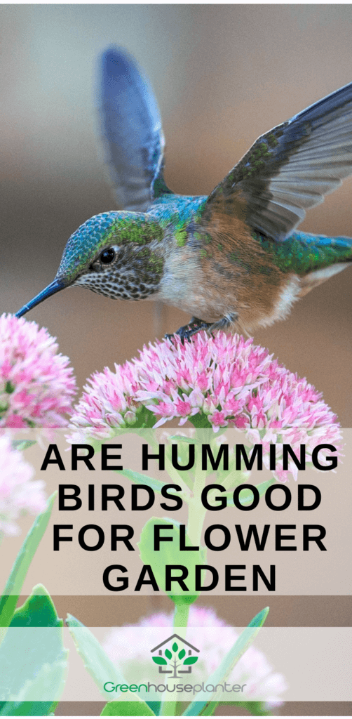 Are hummingbirds good for flower Garden