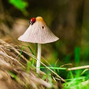 Is it safe to eat wild mushrooms?