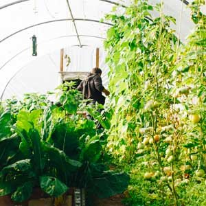 WHAT TO GROW IN A HOOP HOUSE