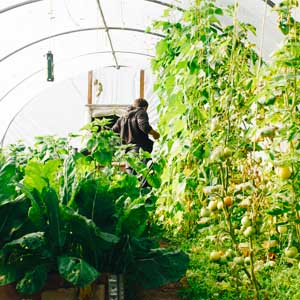 WHAT TO GROW IN A HOOP HOUSE feature photo
