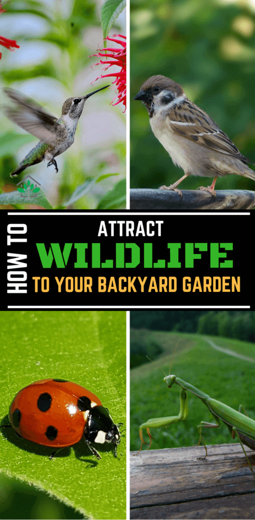 Attracting wildlife to your garden is very cool and healthy practice. These insects and birds will increase the beauty of your garden and it will also keep the pests in control