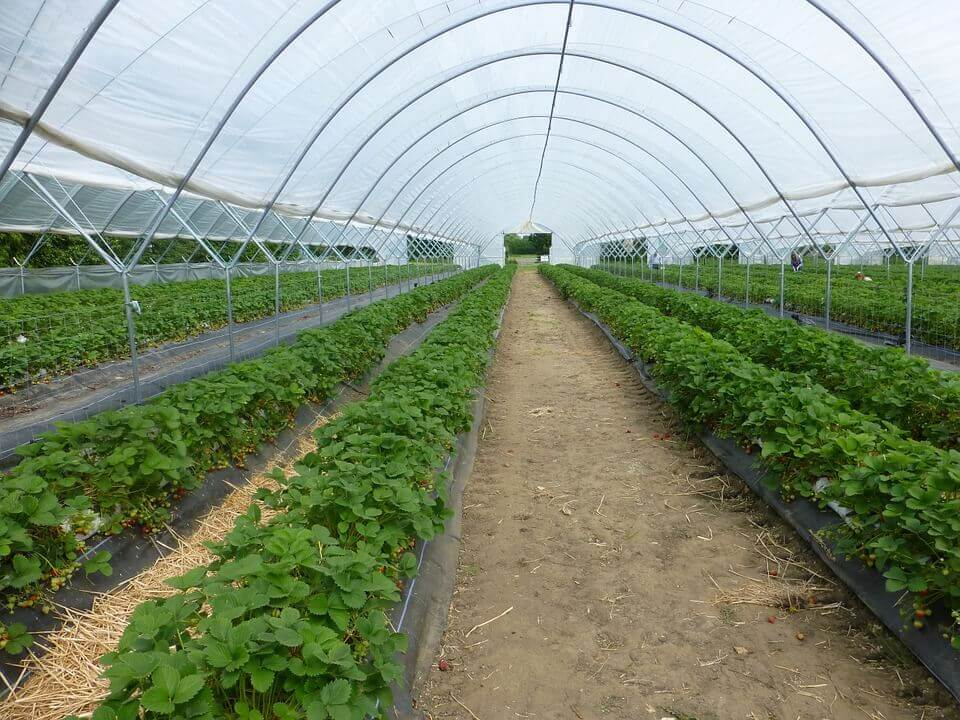 CAN YOU GROW IN A GREEN HOUSE IN SUMMER