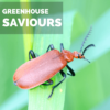INSECTS that are Actually Saviours of Your Greenhouse Plants