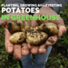 How to Grow Potatoes in Greenhouse | Greenhouse Potatoes Guide