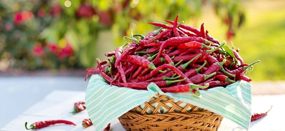 Basket full of chili peppers