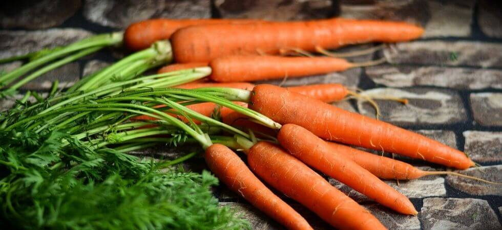 How to grow carrots inside your hoop house