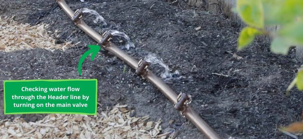 flushing the header line of the drip irrigation system with water