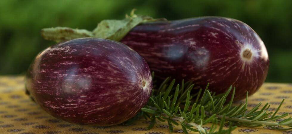 how to grow egg plant inside your hoop house