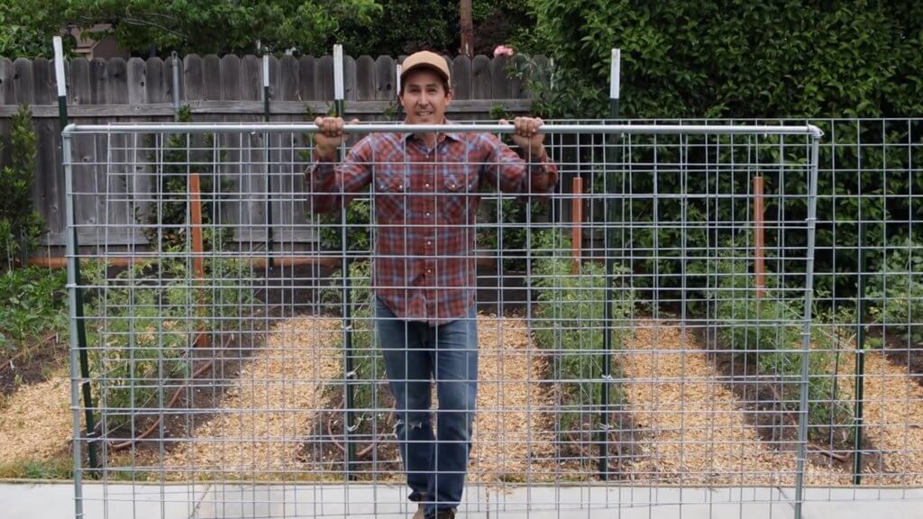 How to build a greenhouse trellis for your greenhouse cucumbers and tomatoes