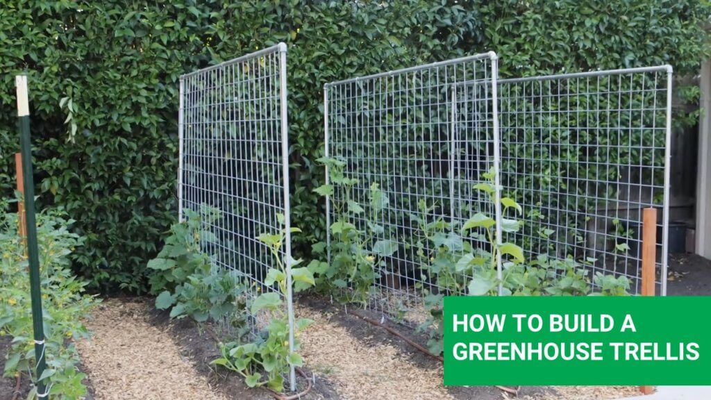 How to make greenhouse trellis for cucumbers and tomatoes
