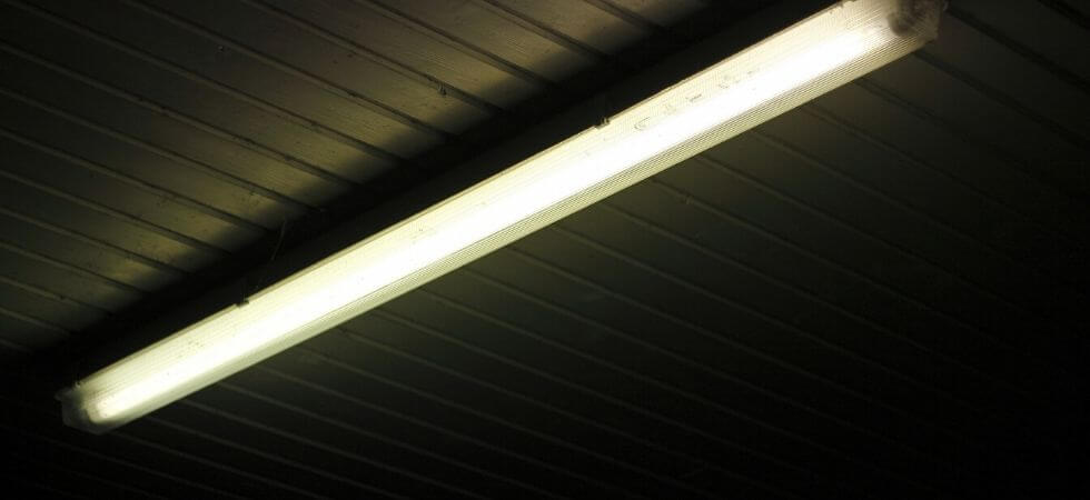 fluorescent lights can also be used for growing plants indoors